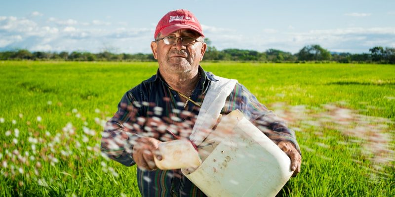 Ein Kleinbauer in Kolumbien schüttet die Reissaat aus. Kein einfacher Job. Oft fehlen Maschinen - wie hier auf dem Bild.